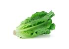 Fresh Lettuce (Bunch)